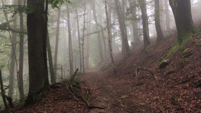 Im Bayrischen Wald: Stallmang – Kunitz – Kreuzhaus – Sankt Englmar